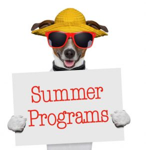 summer program dog type